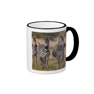 Burchell's Zebra, Equus burchellii, Masai Mara, Mugs