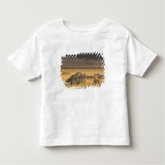Burchell's Zebra, Equus burchellii, Ngorongoro Shirt