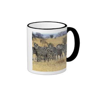 Burchell's Zebra, Equus burchellii, Tarangire Coffee Mugs