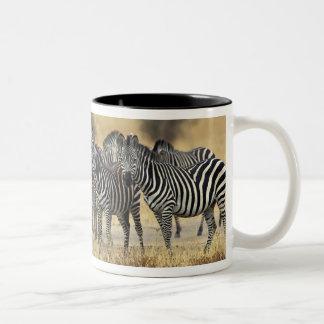Burchell's Zebra, Equus burchellii, Tarangire Mugs