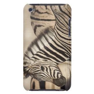 Burchell's Zebra (Equus quagga burchellii) foal iPod Case-Mate Cases