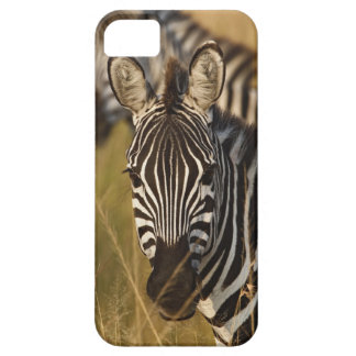 Burchell's Zebra in tall summer grass, Masai Barely There iPhone 5 Case