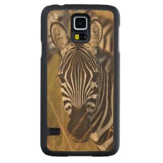 Burchell's Zebra in tall summer grass, Masai Carved Maple Galaxy S5 Case