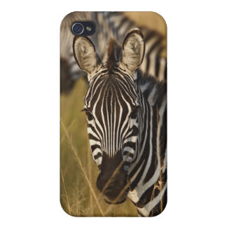 Burchell's Zebra in tall summer grass, Masai Cases For iPhone 4