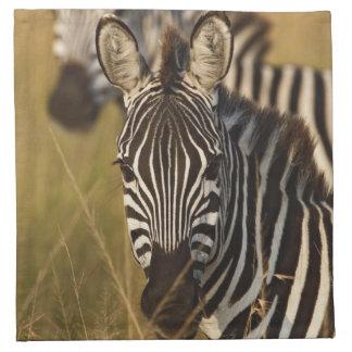 Burchell's Zebra in tall summer grass, Masai Napkin