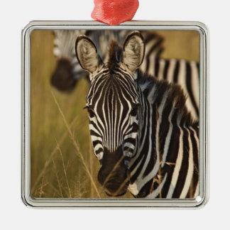 Burchell's Zebra in tall summer grass, Masai Silver-Colored Square Decoration