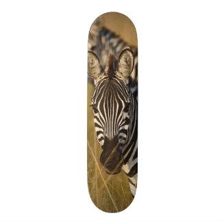 Burchell's Zebra in tall summer grass, Masai Skateboard Decks