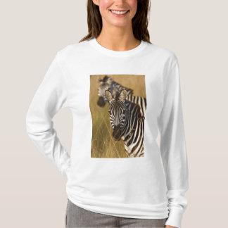Burchell's Zebra in tall summer grass, Masai T-Shirt