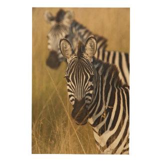 Burchell's Zebra in tall summer grass, Masai Wood Wall Art