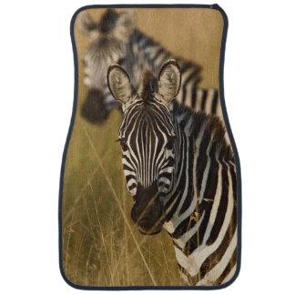 Burchell's Zebra in tall summer grass, Masai Car Mat