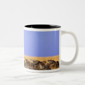 Burchell's Zebras and Wildebeest in tall Mugs