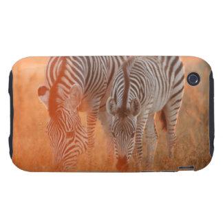 Burchell's Zebras, Equus burchelli grazing at Tough iPhone 3 Cases