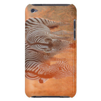 Burchell's Zebras, Equus burchelli grazing at iPod Touch Case