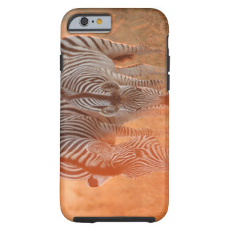 Burchell's Zebras, Equus burchelli grazing at Tough iPhone 6 Case