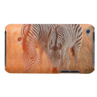 Burchell's Zebras, Equus burchelli grazing at iPod Touch Case-Mate Case
