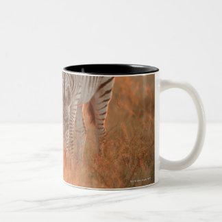 Burchell's Zebras, Equus burchelli grazing at Two-Tone Coffee Mug