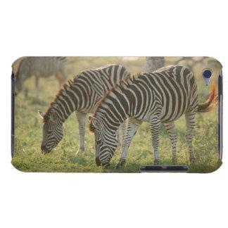 Burchell's Zebras, Equus burchelli grazing, Barely There iPod Cases