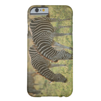 Burchell's Zebras, Equus burchelli grazing, Barely There iPhone 6 Case