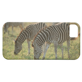 Burchell's Zebras, Equus burchelli grazing, iPhone 5 Covers