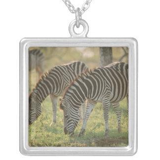 Burchell's Zebras, Equus burchelli grazing, Silver Plated Necklace