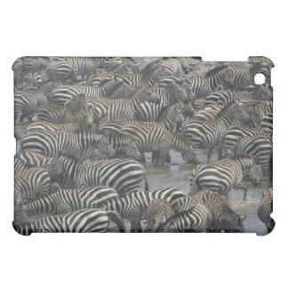 Burchell's zebras (Equus burchelli), Masai Mara, Cover For The iPad Mini