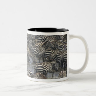 Burchell's zebras (Equus burchelli), Masai Mara, Coffee Mugs