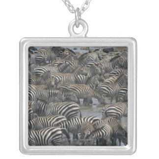 Burchell's zebras (Equus burchelli), Masai Mara, Silver Plated Necklace