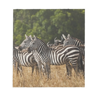 Burchell's Zebras (Equus Burchellii) as seen in Notepad