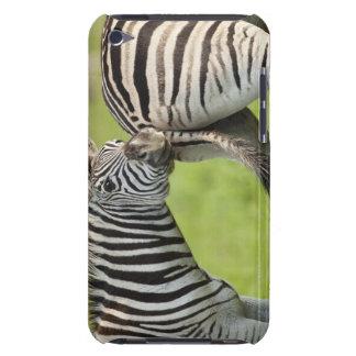 Burchell's Zebras (Equus quagga burchellii), iPod Case-Mate Case