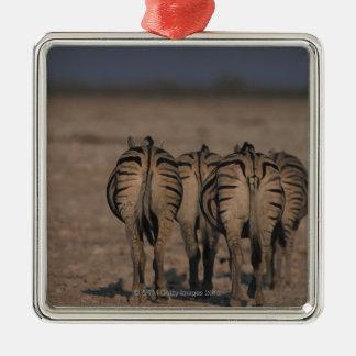 Burchell's Zebras Walking Silver-Colored Square Decoration