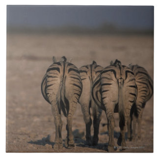 Burchell's Zebras Walking Tile