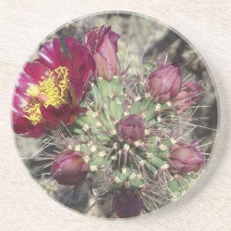 Burgundy Cactus Flowers Beverage Coasters
