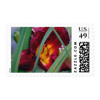 Burgundy Lily  Flower Postage