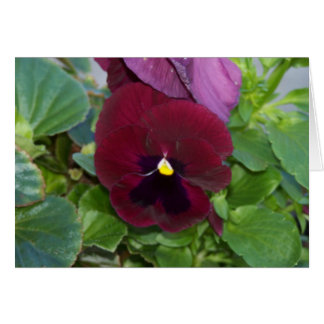 Burgundy Pansy Card