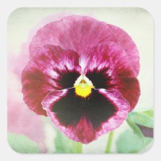 Burgundy Red Pansy Flower Square Sticker