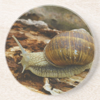 Burgundy Roman Edible Snail Helix Pomatia Beverage Coasters
