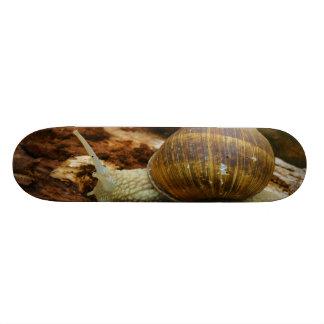 Burgundy Roman Edible Snail Helix Pomatia Custom Skateboard
