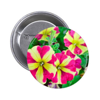 Burgundy Star Petunias 6 Cm Round Badge