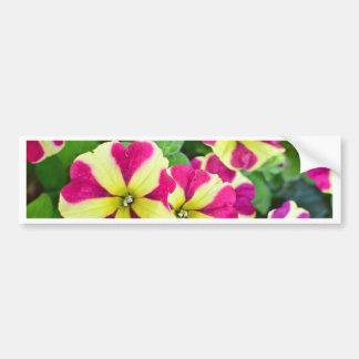 Burgundy Star Petunias Bumper Sticker
