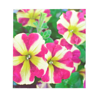 Burgundy Star Petunias Notepad