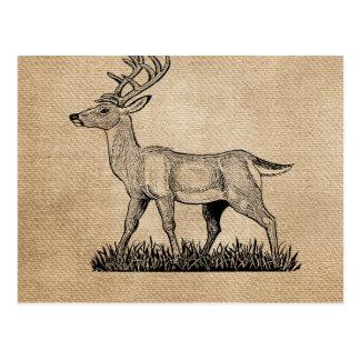 Burlap Deer Buck Horns Rustic Background Postcards