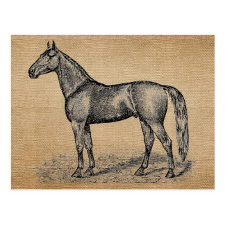 Burlap Vintage Horse Postcard
