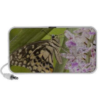 Burma Tachileik Lime buterfly Papilio Laptop Speakers