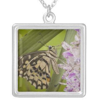 Burma, Tachileik, Lime buterfly Papilio Square Pendant Necklace