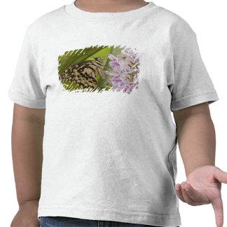 Burma, Tachileik, Lime buterfly Papilio Tee Shirts