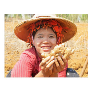 Burmese Lady Picking Ginger Postcard