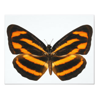 Burmese Lascar Butterfly 11 Cm X 14 Cm Invitation Card