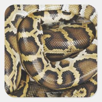 Burmese python square sticker