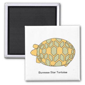 Burmese Star Tortoise Magnet top green