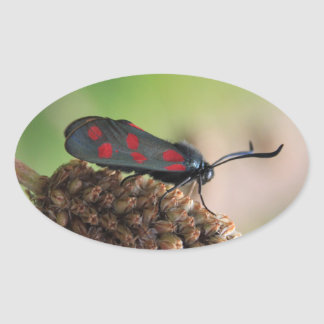 Burnet moth oval sticker